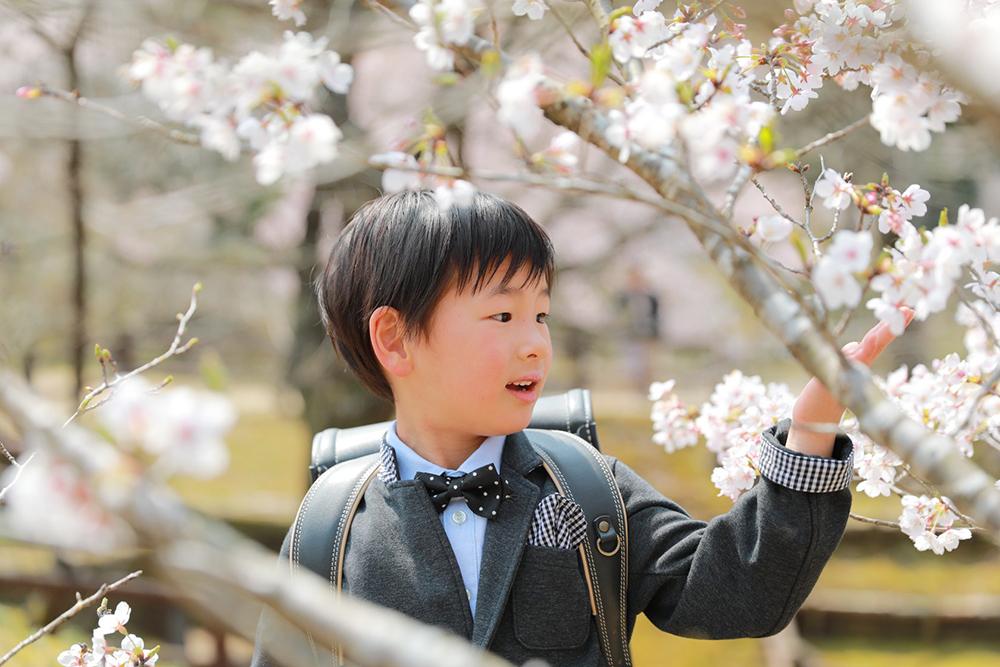 美濃加茂市のさくらの森で入学フォト 【出張フォト可児】