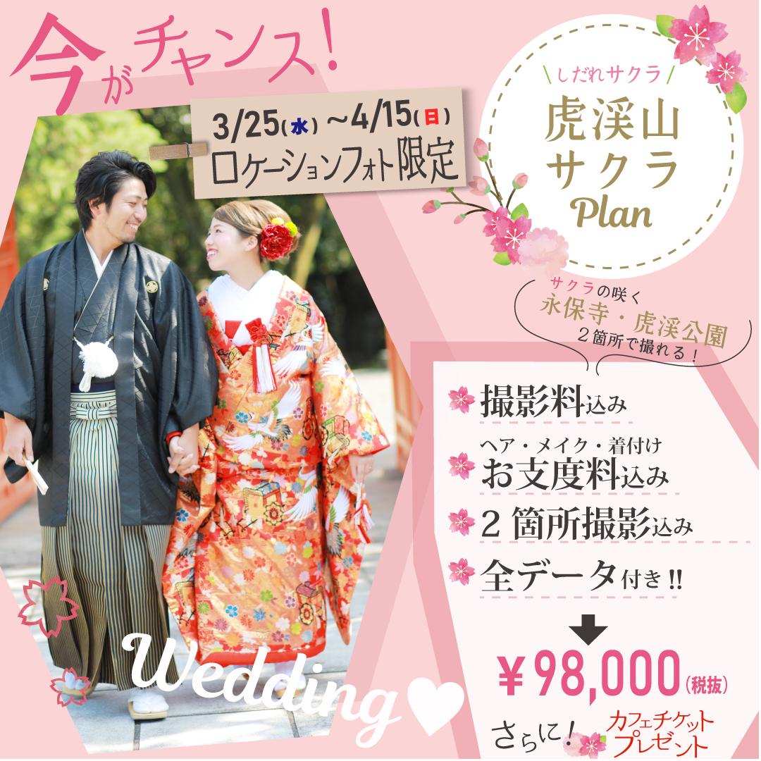 桜の下で結婚写真♡≪3/25-4/15限定≫